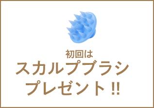 初回はスカルプブラシプレゼント!!